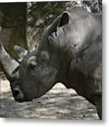Side Profile Of A Large Rhinoceros With Two Horns  Metal Print