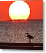 Silhouette Of Great Blue Heron Ardea Metal Print