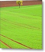 Single Tree In Green Field Metal Print