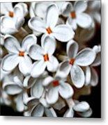 Small White Flowers Digital Metal Print