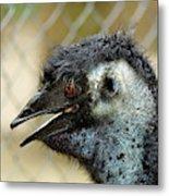 Smiley Face Emu Metal Print