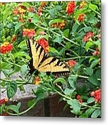 Snacking Metal Print