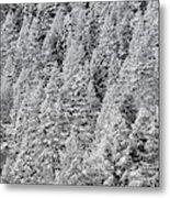 Snow On Evergreens Metal Print