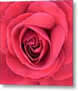Soft Rose Metal Print