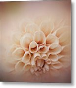 Soft, Subtle Dahlia Metal Print