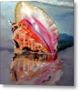 Solitary Conch Metal Print