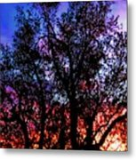 Sonoran Sunrise Ironwood Silhouette Metal Print