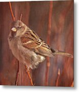 Sparrow In The Sunshine Metal Print