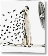 Spots Flying Off Dalmation Dog Metal Print