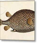 Spotted Trunk Fish  Metal Print