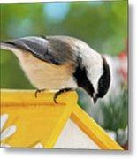 Spring Chickadee Metal Print