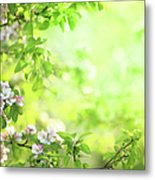 Spring Flowers Blooming Orchard - Metal Print