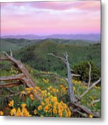 Spring Sunset Metal Print