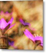 Spring Wild Flower 4 Metal Print