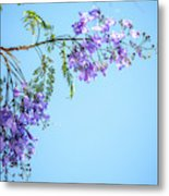 Springtime Beauty Metal Print