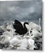 Stand Out Of The Crowd - The Black Swan Metal Print