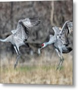 Stay With Your Wingman Metal Print