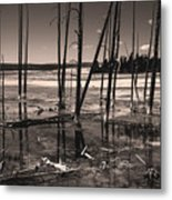 Sulfur Field Metal Print