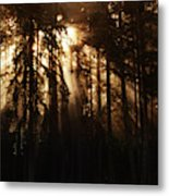 Sultry Morning Radiance Metal Print