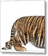 Sumatran Tiger Cub - Panthera Tigris Metal Print