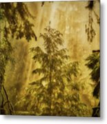 Sunbeams In The Foggy Forest #3 Metal Print