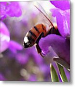 Sunburned Bee Butt Metal Print