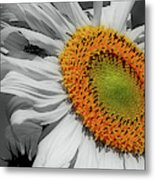 Sunflower And Shy Friend Metal Print