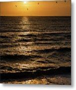 Sunrise Birds North Carolina Metal Print