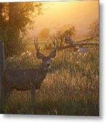 Sunset Deer Metal Print