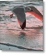 Sunset Glide Metal Print