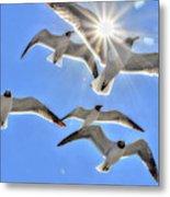 Sunshine And Seagulls Metal Print