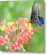 Swallowtail Butterfly Wings  Metal Print