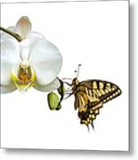 Swallowtail On White Orchid Metal Print