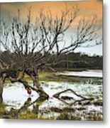 Swamp And Dead Tree Metal Print