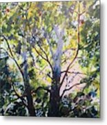 Sycamore Inspiration Metal Print