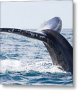 Tail Of Whalewhale Show The Tail Above Metal Print