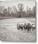 Team Of Six Horses Tilling The Fields Metal Print