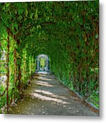 The Alley Of The Ivy Metal Print