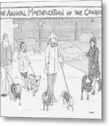 The Annual Mortification Of The Canines Metal Print