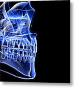 The Bones Of The Jaw Metal Print