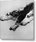 The Borzois, Black And White Sketch, 3 Russian Wolfhounds Metal Print