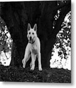 The Dog And The Tree Metal Print