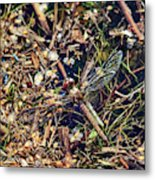The End. Vagrant Darter Metal Print