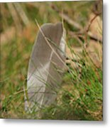 The Feather Metal Print
