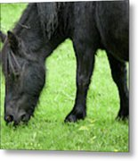 The Grass Is Greener Here. The Black Pony Metal Print