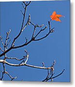 The Last Leaf During Fall Metal Print