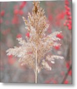 The Red Of Winter Metal Print
