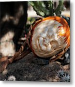 The Sleeping Pumpkinman  Metal Print