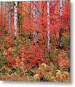 The Wasatch Mountain Forest Of Maple Metal Print