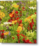 The World Laughs In Flowers - Poppies Metal Print